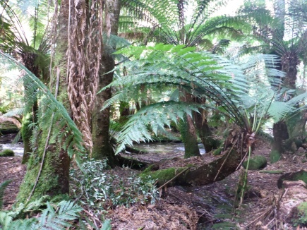 Crazy tree ferns