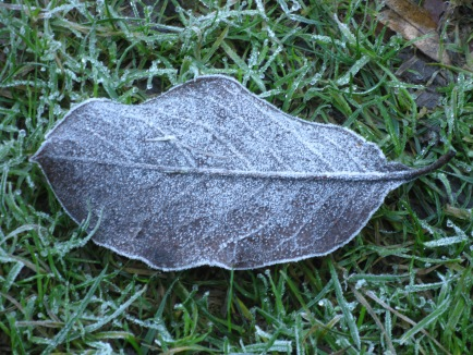 A very frosty leaf Cascade Rivulet
