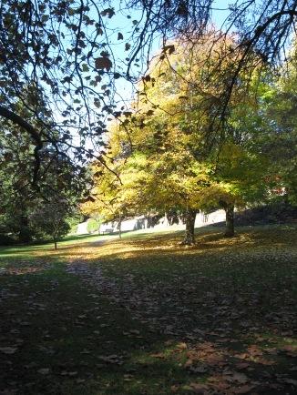 Autum leaves on the Cascade walk