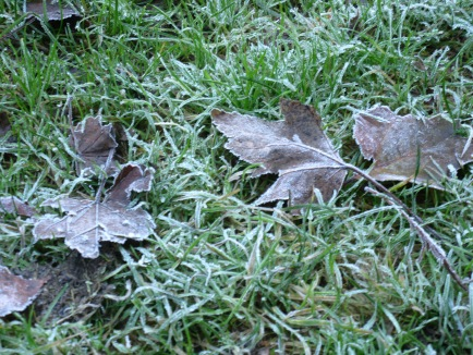 The frost has set in.