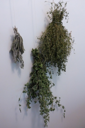 Fresh herbs from the garden drying in the laundry room.