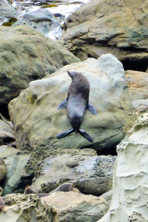 One of the many seals posing for us on the South Island