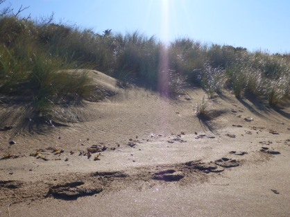 Sand dunes on one side....