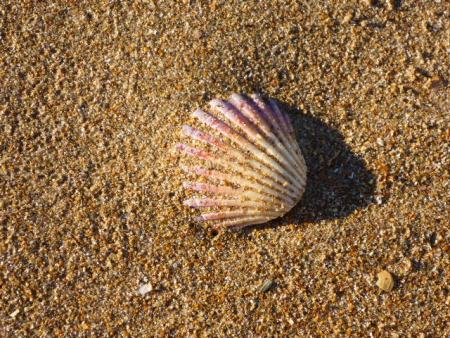 Seashell and sand!
