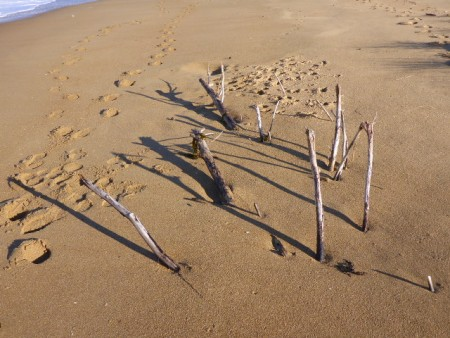 The beach forest