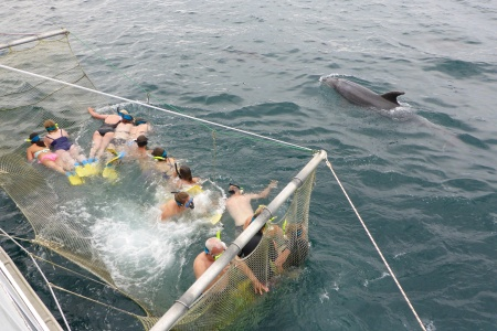 The Boom Net and Swimming with the dolphins